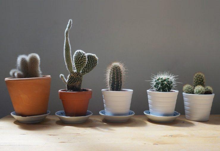 cactus maison intérieur